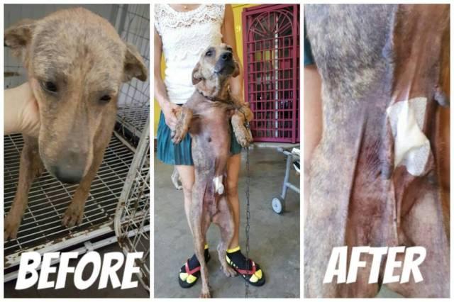 Neutering Aid For 3 Dogs In Rawang (Danny Lee Choon Kuan's)