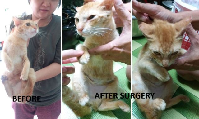 Neutering Aid For 1 Cat In Pandan Indah (Ng Koon Yeow's)