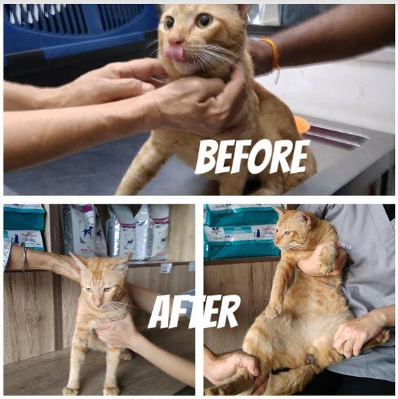 Neutering Aid For 1 Cat In Klang (Lim Min Khian's)