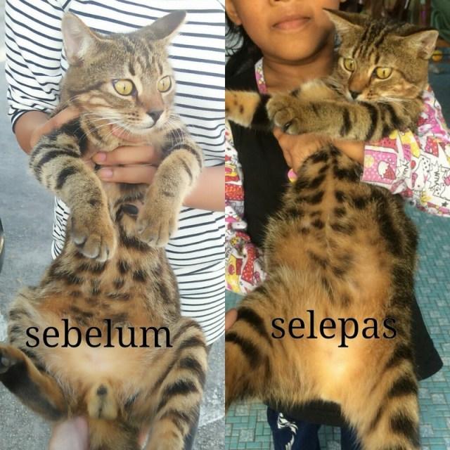 Neutering Aid For 3 Cats In Kuantan (Nur Fatihah Bt Roslan's)