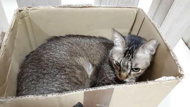 Cat-In-The-Box!