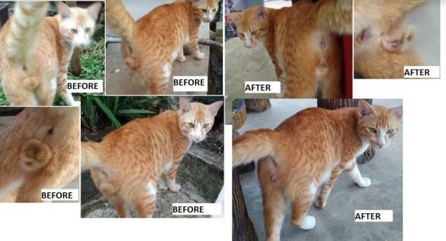 Neutering Aid For 1 Cat In Bernam Jaya (Siti Khaulah Bt Abdul Razak's)