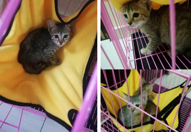 Neutering Aid For 1 Cat In Setia Alam (Po Ye Koon's)