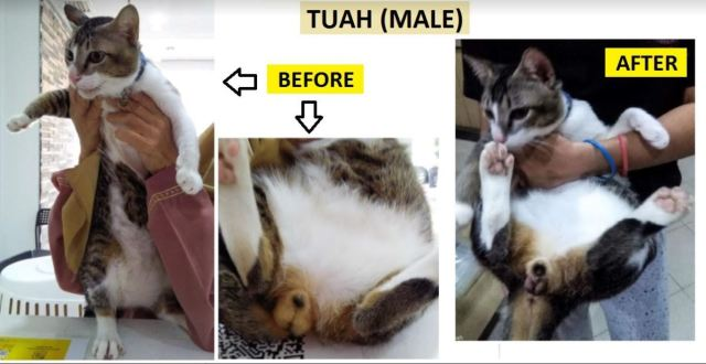 Neutering Aid For 1 Cat In Shah Alam (Hannah Bt Kamaruzaman's)