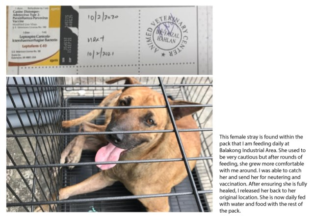 Vaccination Aid For 1 Dog In Balakong (Liew Wei Jane's)