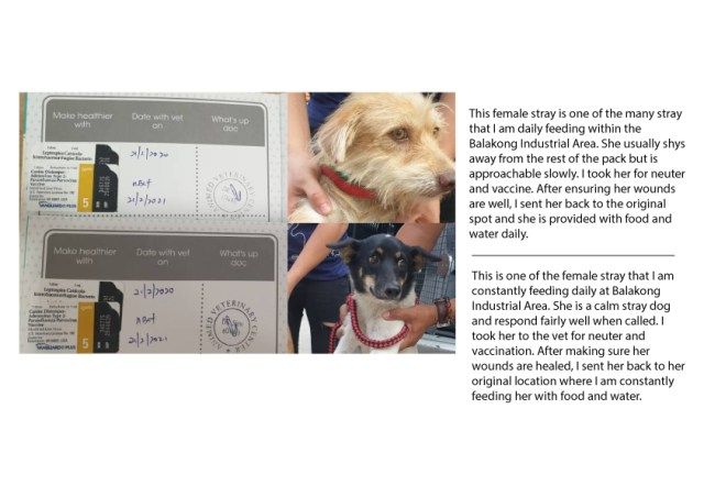 Vaccination Aid For 3 Dogs In Balakong (Liew Wei Jane's)