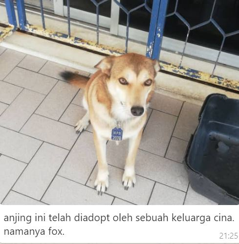 Neutering Aid For 1 Dog In Bentong (Lee Chee Woei's) & Updates
