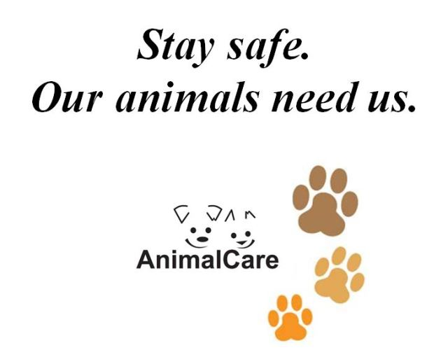 Please Stay Safe…for Your Animals