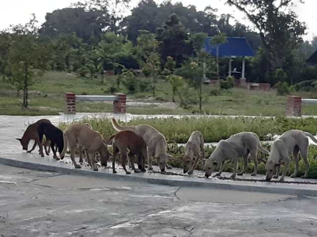 Petfood Donation For New Stray Dogs And….monkeys!