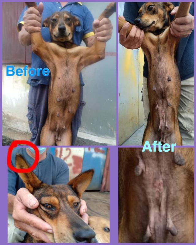 Neutering Aid For 1 Dog In Balakong (Ng Choy Har's) & Updates