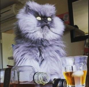 catd12
