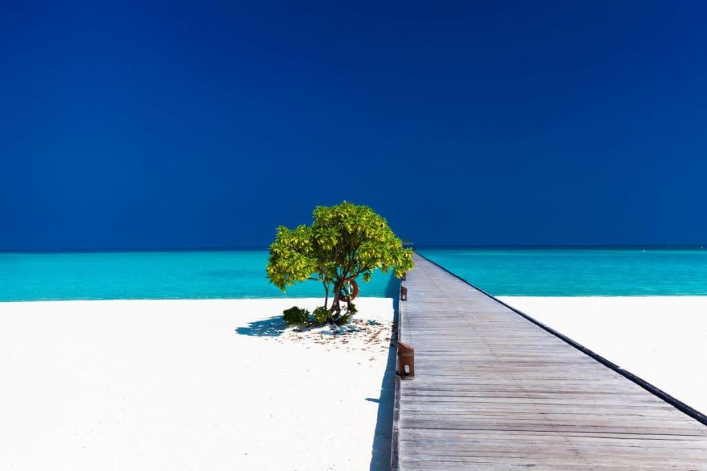 Beautiful beach with wodden jetty and single tree 1200x800 1