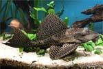 Аквариумные рыбки: фото, названия, описание видов рыб ...