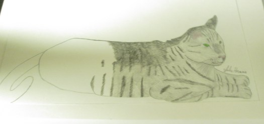 I am using pencil to add the dark and light stripes to the cat.