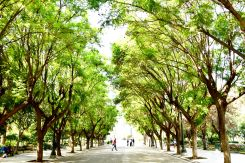 By OlgaBo National Garden in Athens is a public park in the center of the city.