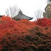 "10,000 hydrangeas, Hondoji temple ""Ajisai-dera"" in Chiba"