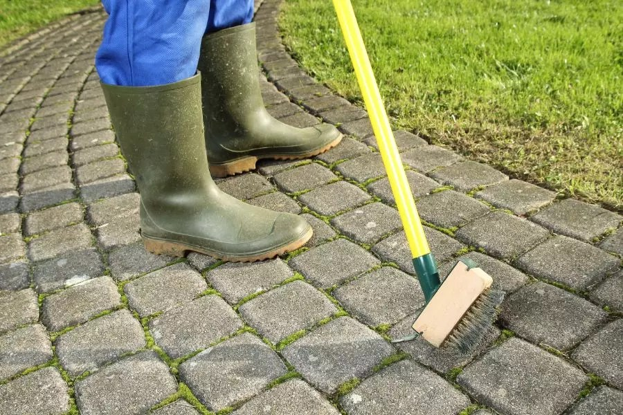 get rid of moss on your patio