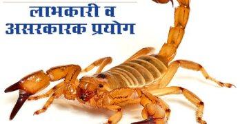 Scorpion-bites
