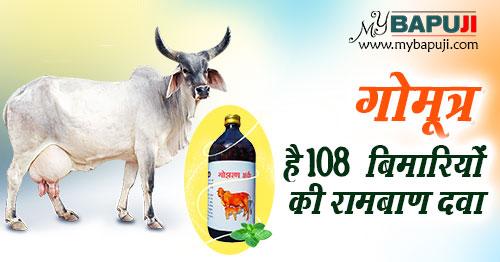 Benefits Of Cow Urine(Gomutra Ark)