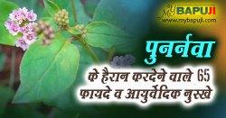 Punarnava in Hindi - पुनर्नवा के 65 फायदे औषधीय गुण और उपयोग