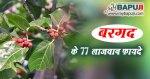 बरगद के 77 लाजवाब फायदे व चमत्कारी औषधीय प्रयोग | Bargad ke Fayde