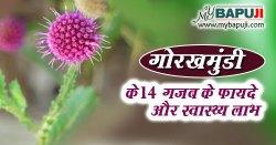 गोरखमुंडी के फायदे गुण उपयोग और नुकसान Gorakhmundi Dosage, Benefits and Side Effects in Hindi