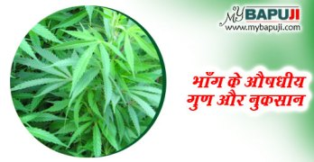 bhang khane ke fayde aur nuksan in hindi