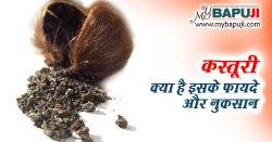 कस्तूरी क्या है इसके गुण ,उपयोग ,फायदे और नुकसान | Kasturi Ke Fayde Aur Nuksan