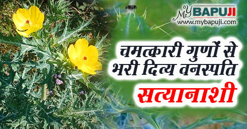 Satyanashi ke fayde aur nuksan in hindi
