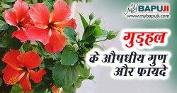 Gudhal in Hindi गुड़हल के फायदे गुण और दुष्प्रभाव
