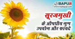 Sunflower in Hindi सूरजमुखी के फायदे गुण उपयोग और दुष्प्रभाव