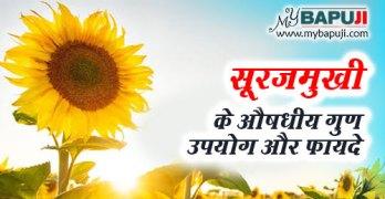 Surajmukhi ke fayde gun upyog aur nuksan in hindi