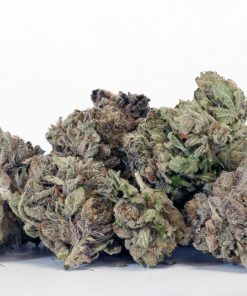 Girl-Scout-Cookies Hybrid Cannabis