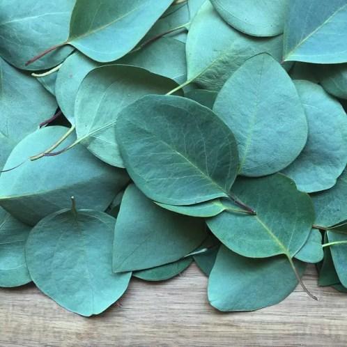 Eucalyptus Oil for BeardGrowth