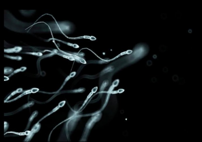 low sperm count facial hair, does sperm make woman happy, is sperm good for the skin and hair, does sperm contain collagen, can sperm on skin cause bumps,