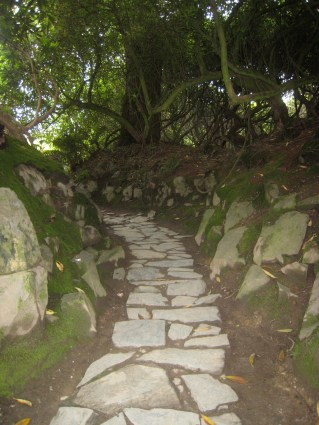 Down the path to the glade