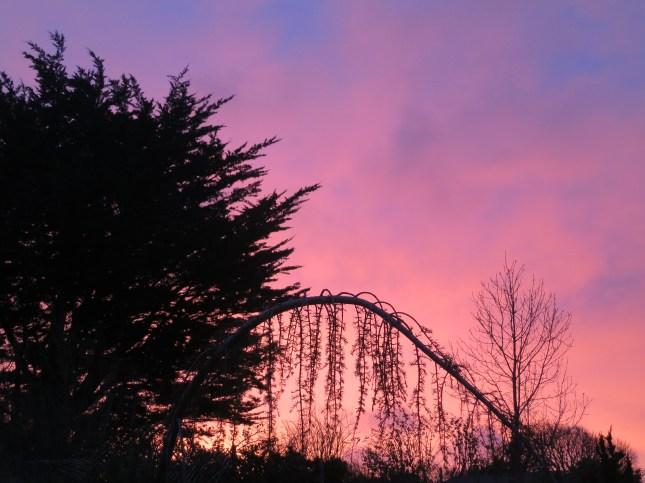 Dawn over the back garden