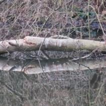 Fallen tree - close up detail