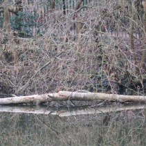 Fallen tree in detail