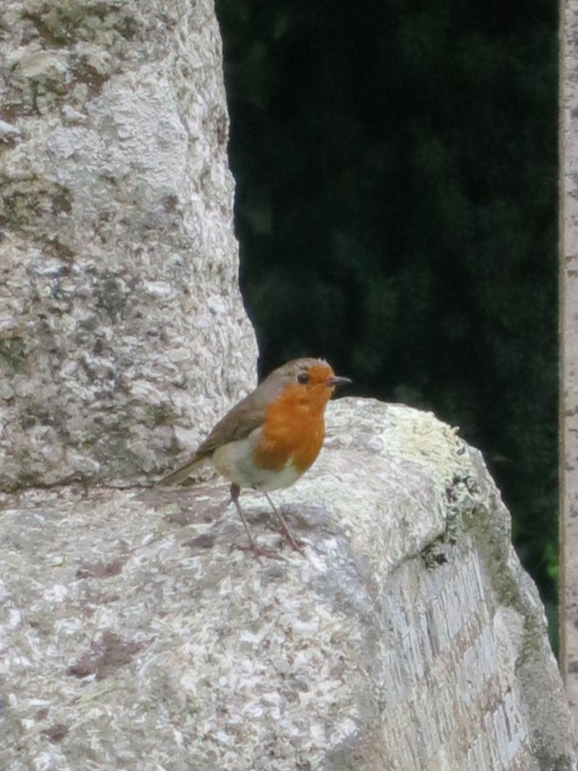 Robin on a gravestone