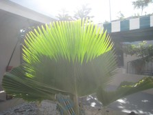 Leaves in a Senegalese garden