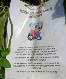 Information about the edible plot and the Friends of Furniss Island
