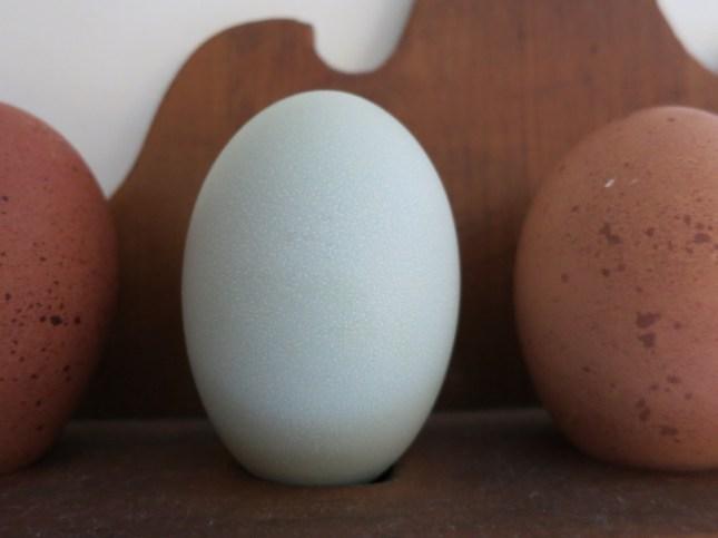 Large blue egg
