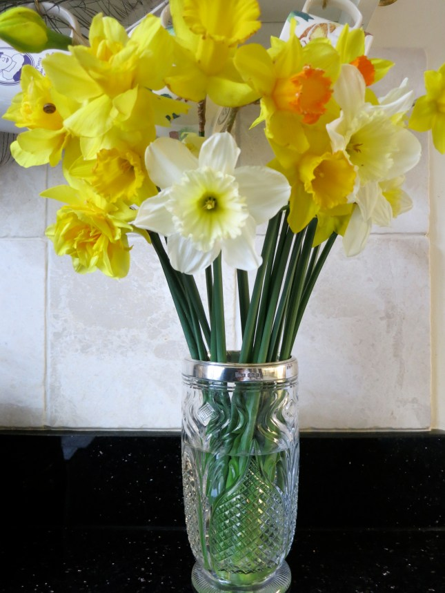 Daffodils from our garden