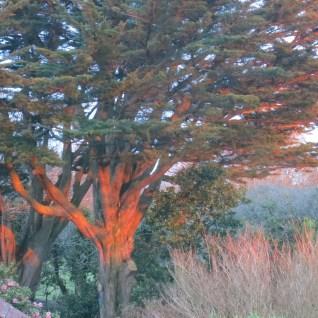 Sunlight on both trees last October