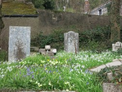 Graves covered in Spring blooms
