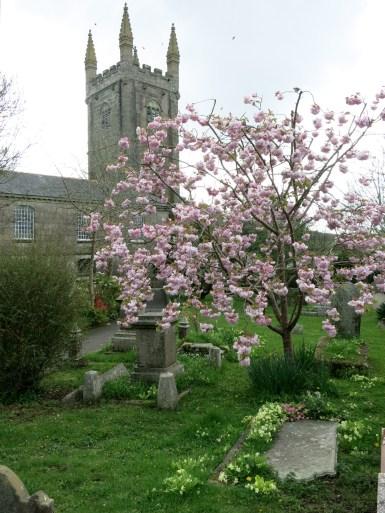 St Euny Church and Cherry blossom