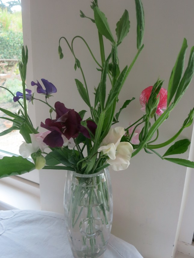 Our last few Sweet Peas