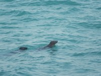 Seals playing about in the water