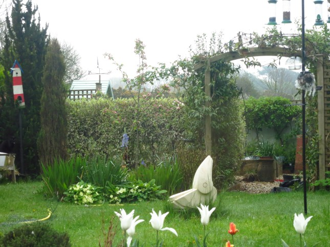 Our back garden in the rain